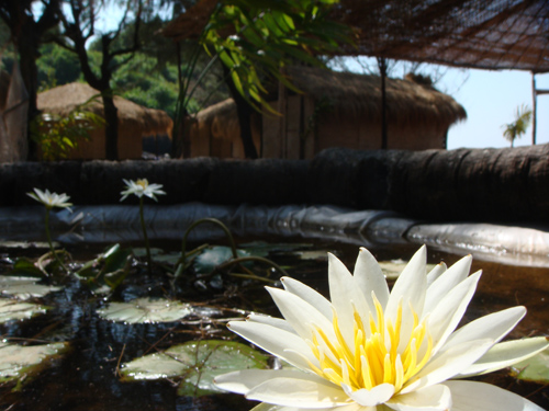 Lotus Yoga Retreat